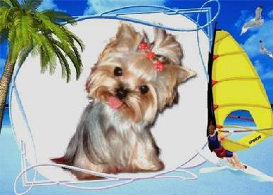 Teacup Yorkies, Teacup Yorkie Breeder, Teacup Yorkies for Sale
